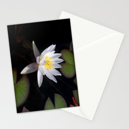 The white nymphaea Stationery Cards