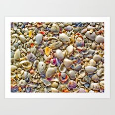 Seashells on the Shore Art Print
