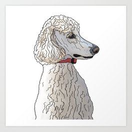 Kyah the White Standard Poodle Art Print