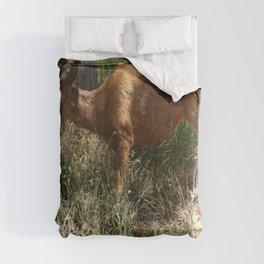 Mule Deer At Zion Park Comforters