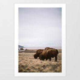 Bison Ridicule Art Print