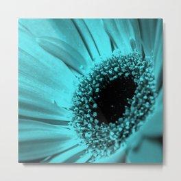 Gerbera . Blue background . Metal Print