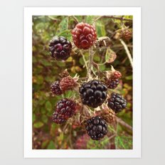 Autumn's Bounty Art Print
