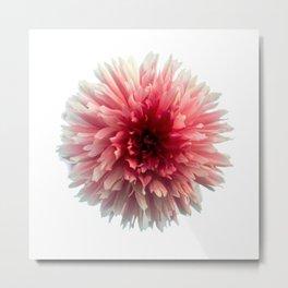 Dahila Red, Pink & White Metal Print