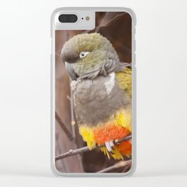 Patagonian Conure Clear iPhone Case