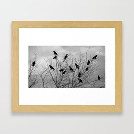 Murder Of Crows - Three Framed Art Print