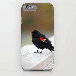 Red Winged Blackbird iPhone Case