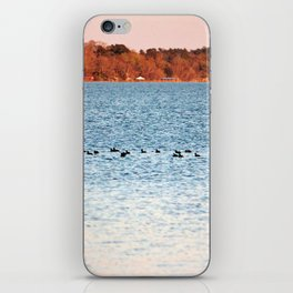 American Coots Crossing Lake iPhone Skin