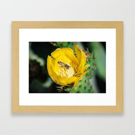 Wasp in Barbary fig flower Framed Art Print