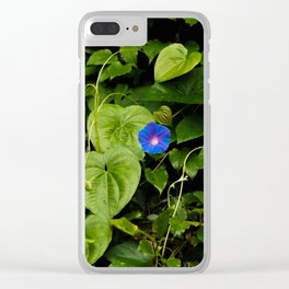Florida: Morning Glory Portrait Clear iPhone Case