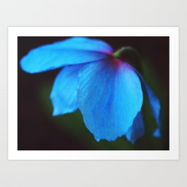 Electric Blue Poppy Experience Art Print