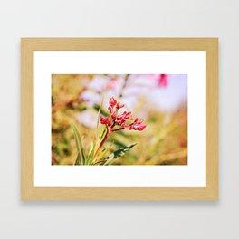 Oleander Framed Art Print