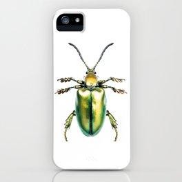 Beetles #2 (Sagra Femorata) iPhone Case