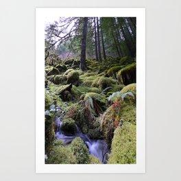 Land of Moss & Water Art Print