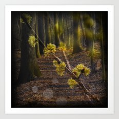 Walking through the forest in early spring Art Print