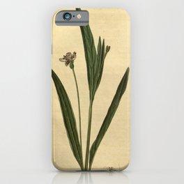 Flower 2367 justicia pedunculosa Long stalked American Justicia10 iPhone Case
