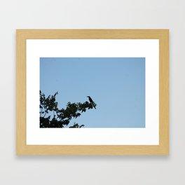 Busy Bird Framed Art Print