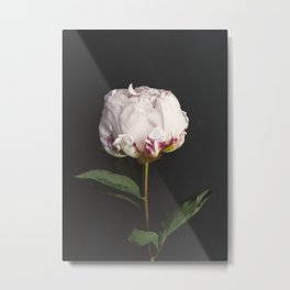 Peony - simply perfect Metal Print