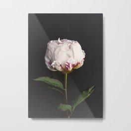 Peony - simply perfect Metal Print