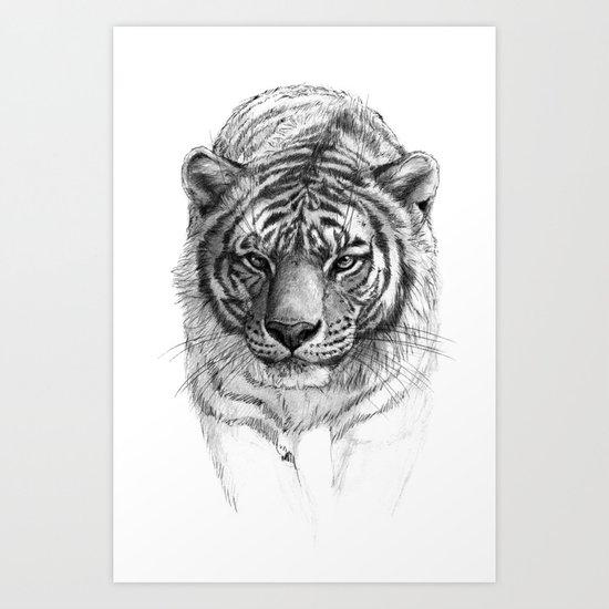 Tiger SK0102 Art Print