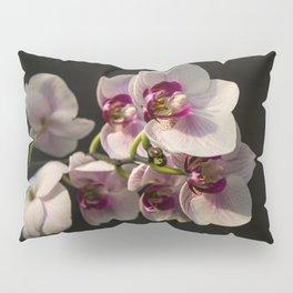 Orchid Branch Pillow Sham