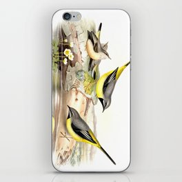 Grey wagtail iPhone Skin