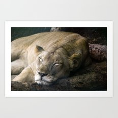 Cat nap II Art Print