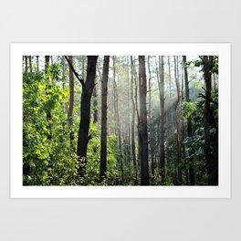 Forest Nature Art Print