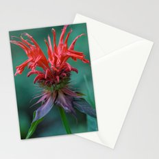 Scarlet Bee Balm {Monarda didyma L.} Stationery Cards