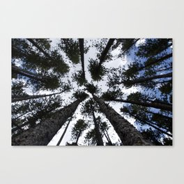 In the Trees Canvas Print