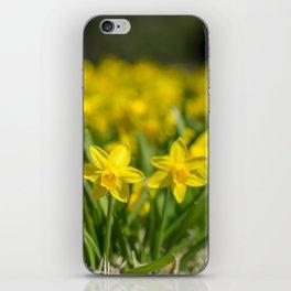Tiny Daffodils iPhone Skin