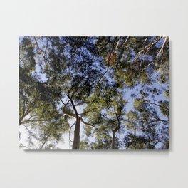 Eucalyptus Tree Canopy Metal Print