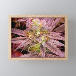 Passionately Purple Framed Mini Art Print