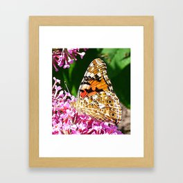 Painted Lady Butterfly 2 Framed Art Print