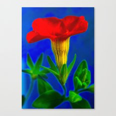 orange & blue Canvas Print