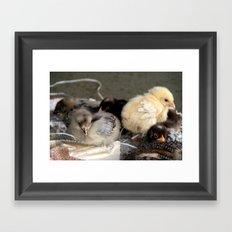Five Young Chicks Framed Art Print