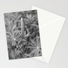 Film Flowers Stationery Cards