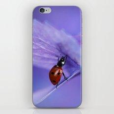 Ladybird on hydrangea iPhone & iPod Skin