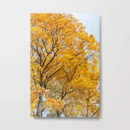 Yellow leaves autumn trees Metal Print