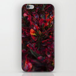 Croton in Red iPhone Skin
