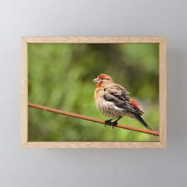 Radiant Red Finch by Reay of Light Photography Framed Mini Art Print