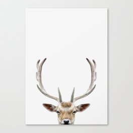 Deer Head Canvas Print
