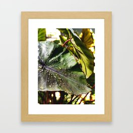 Sunlight After Rain -The Garden Series Framed Art Print