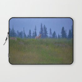 Early morning coyote sighting in Jasper National Park Laptop Sleeve
