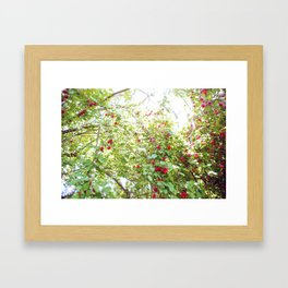 Dreamy Plum Tree Framed Art Print