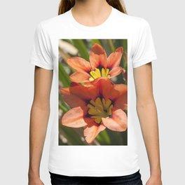Beautiful Sparaxis T-shirt