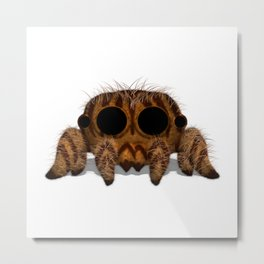 Tigger the Jumping Tiger Spider Metal Print