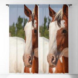 Endangered Spanish Barb Horse Mare Season Blackout Curtain