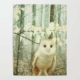 Barn Owl in Snowy Winter Woodland Poster
