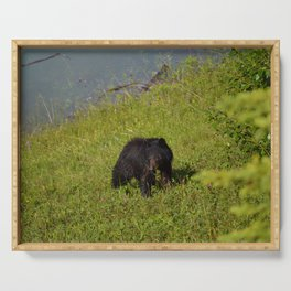 Bear cub emerges from Medicine Lake in Jasper National Park Serving Tray
